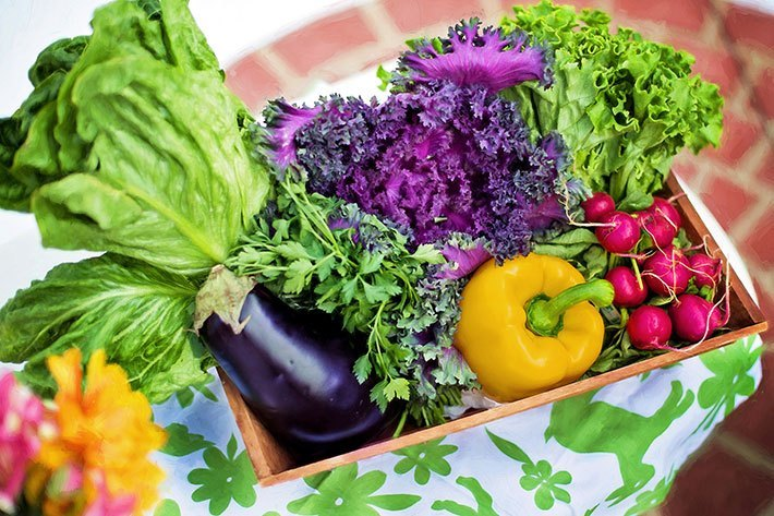 spring vegetables you can plant now